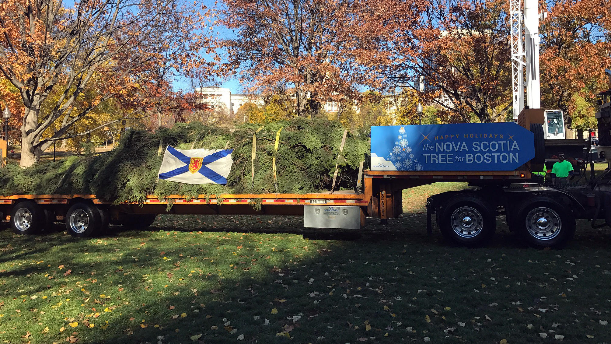 Boston's Christmas Tree Tradition Rooted In A Canadian