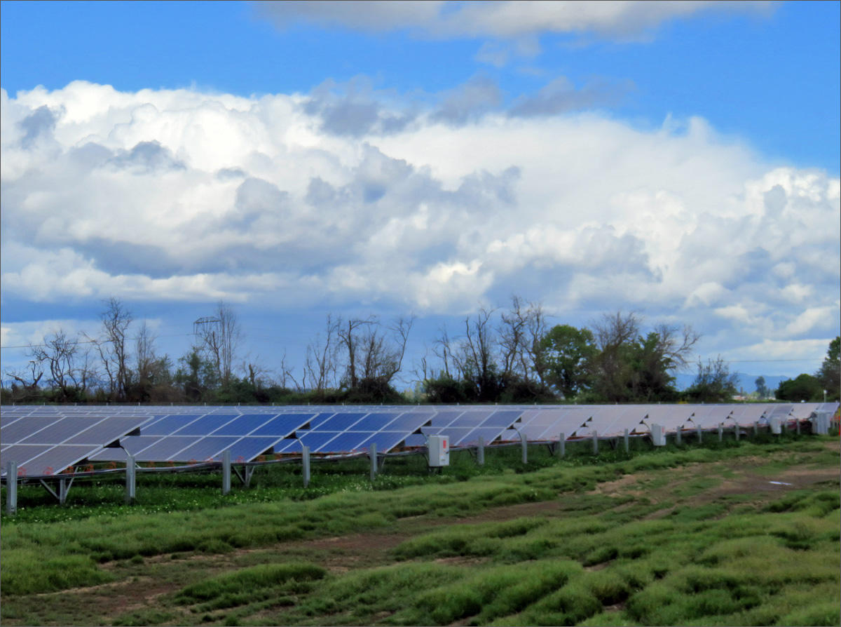 Commercial Solar Arrays On Farmland Cropping Up Bountifully—And Stirring Opposition
