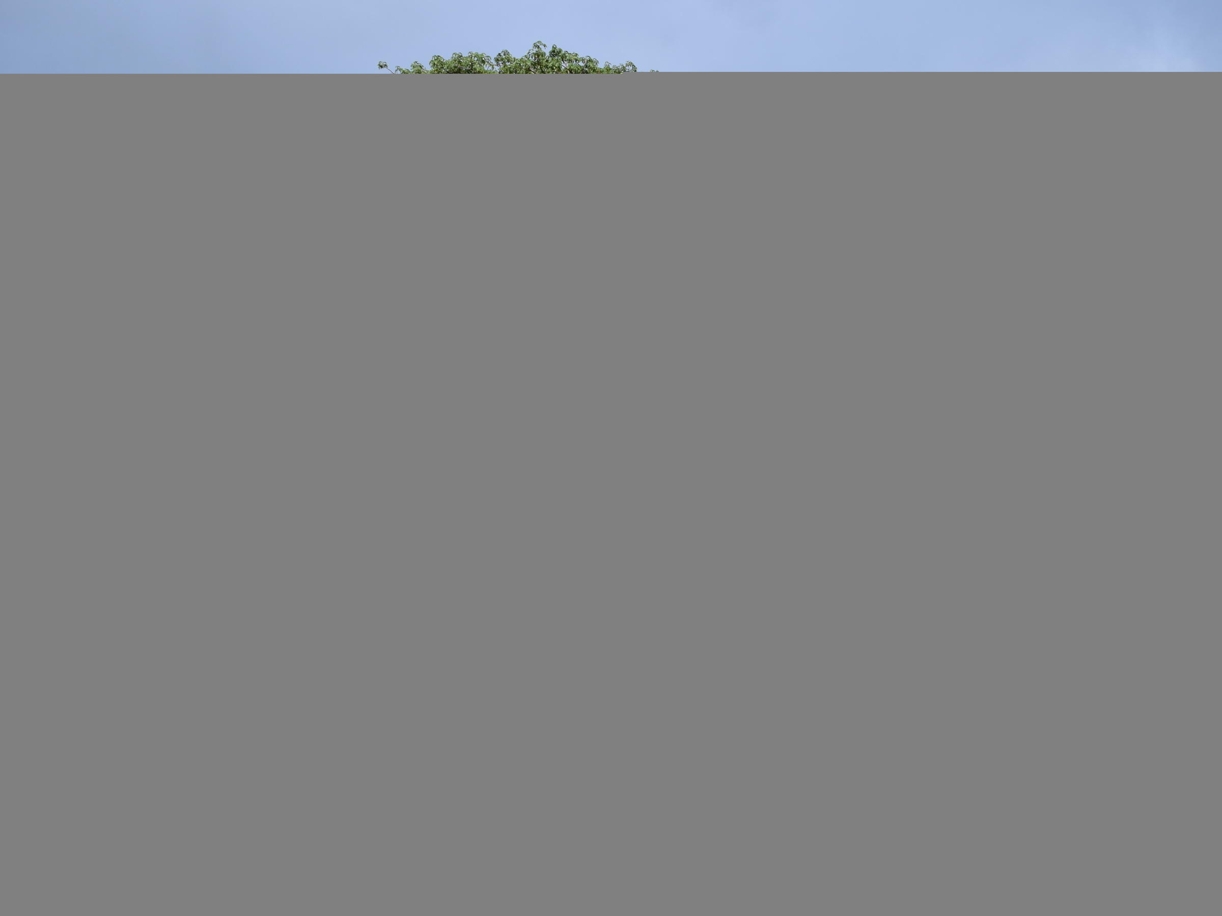 sunland baobab bar