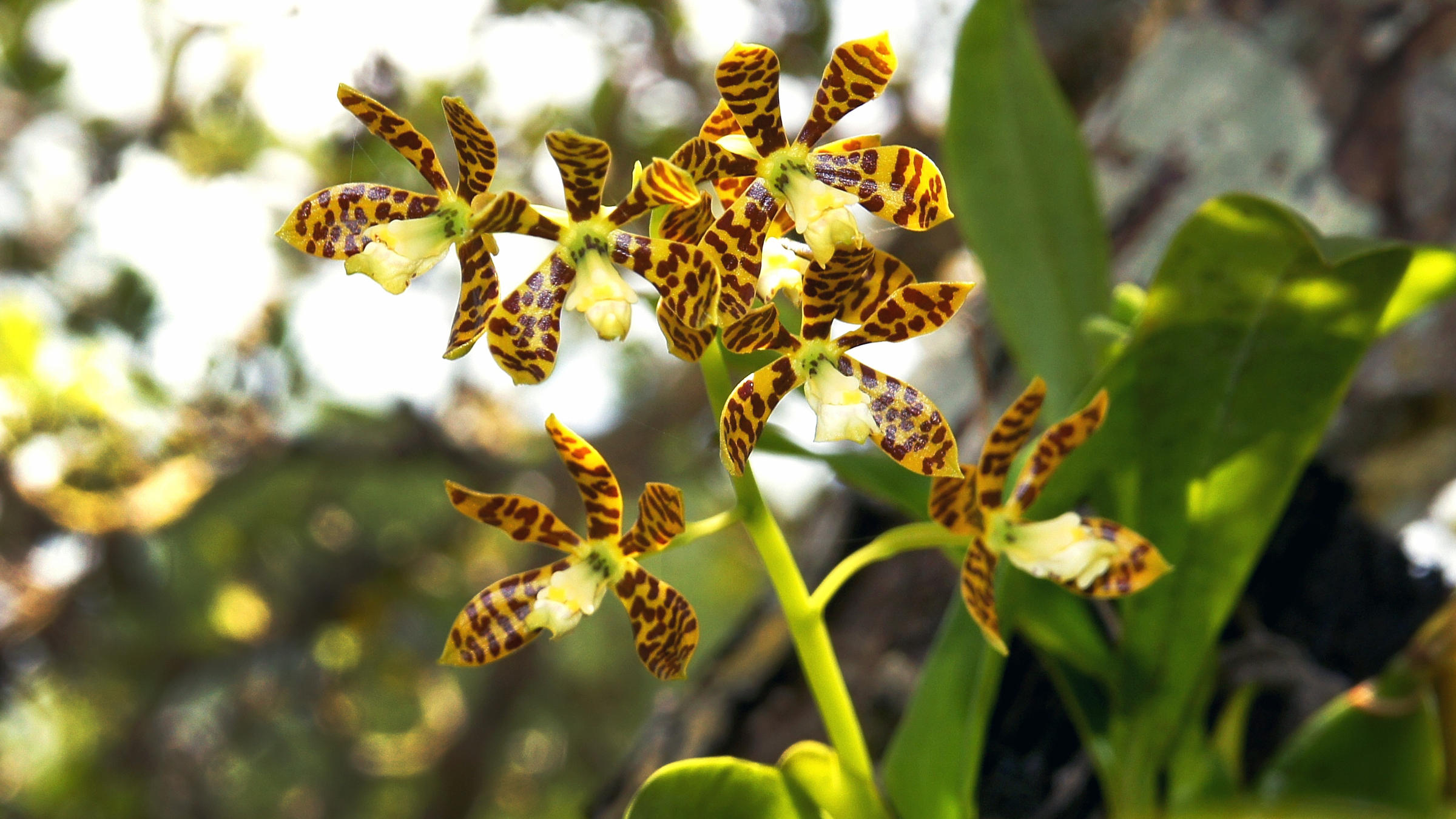 Bringing A Million Orchids To Floridas Trees Wlrn