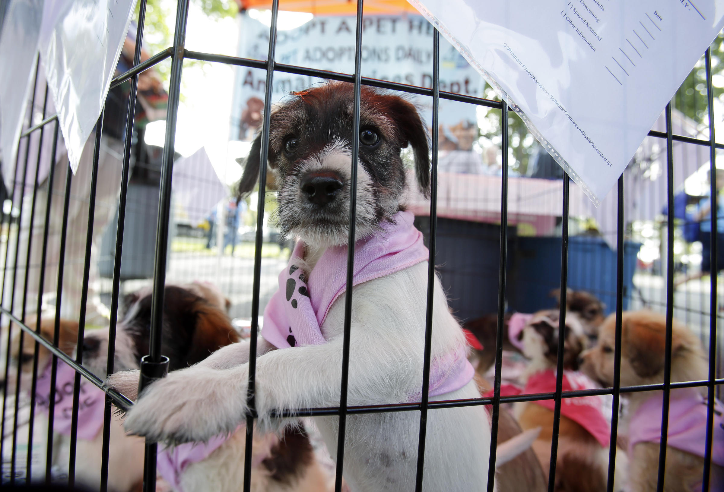 In More Cities That Doggie In The Window Is Not For Sale Kuer 901