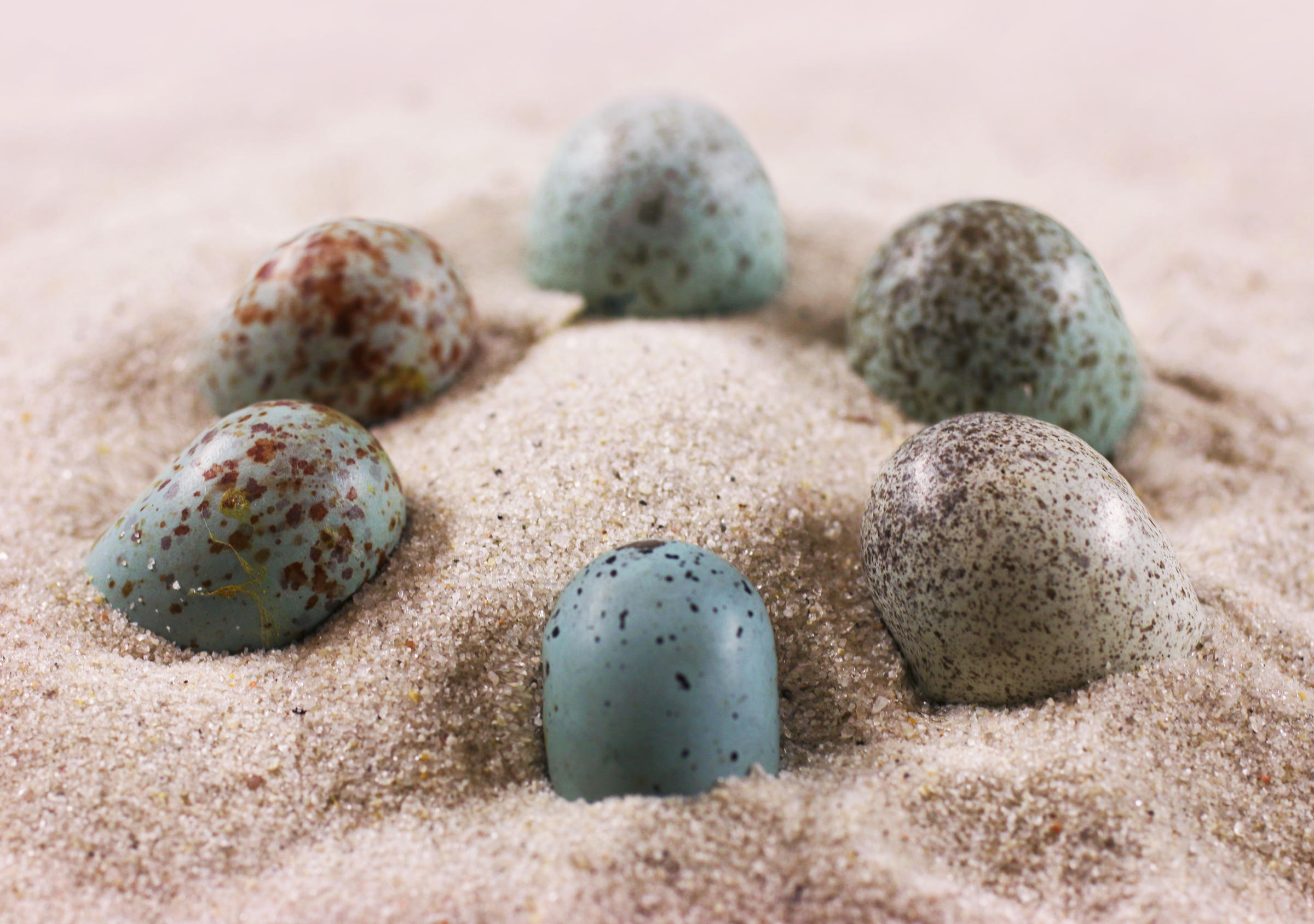 Some dinosaur eggs were blue, brown or speckled