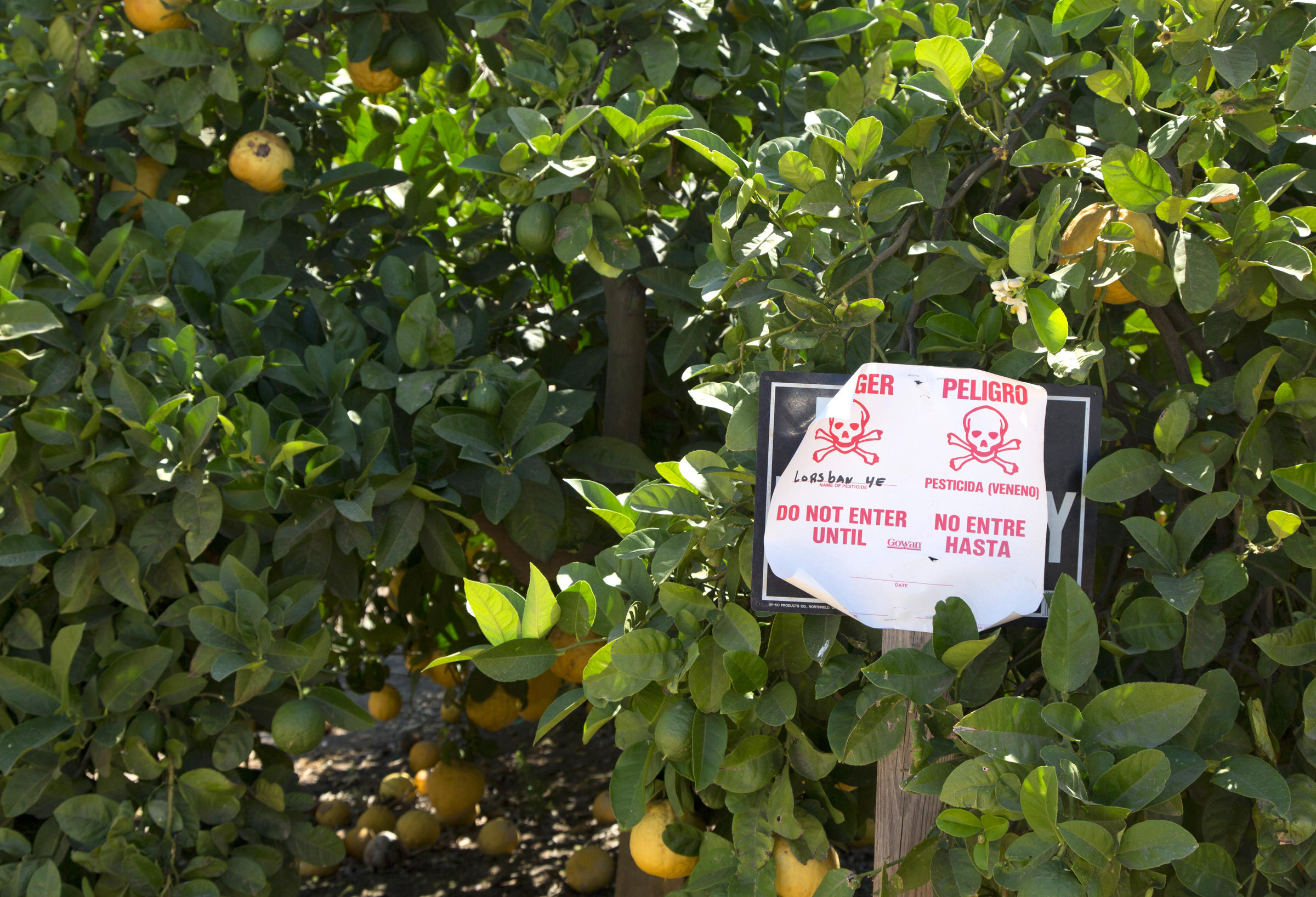 Will An Appeals Court Make The EPA Ban A Pesticide Linked To Serious Health Risks?