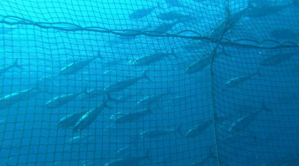 Are there plenty of fish in the sea author says it 39 s time for Plenty fish com