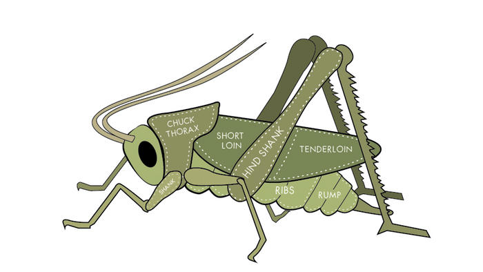 """<p>A promotional image from Coalo Valley Farms <a href=""""https://www.kickstarter.com/projects/coalovalleyfarms/fresh-healthy-sustainable-cricket-protein/"""">Kickstarter campaign</a>.</p>"""