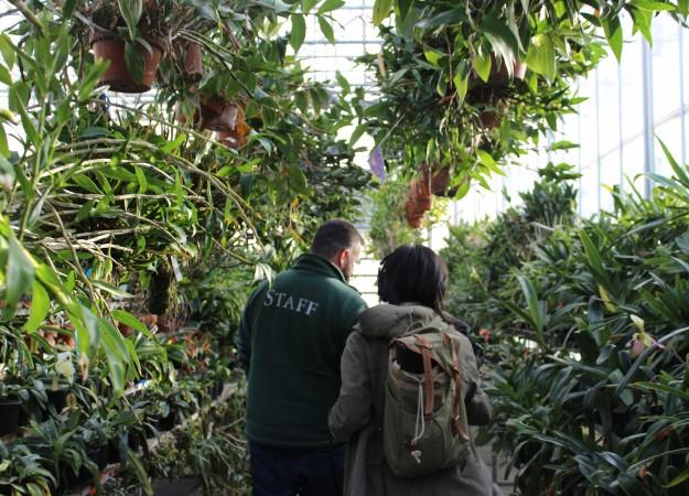 <p>Marc Hachadorian, who oversees the CITES Rescue Center Program for the New York Botanical Garden, and Alexa Lim, associate producer for Science Friday, walk through the Nolen Greenhouses. </p>