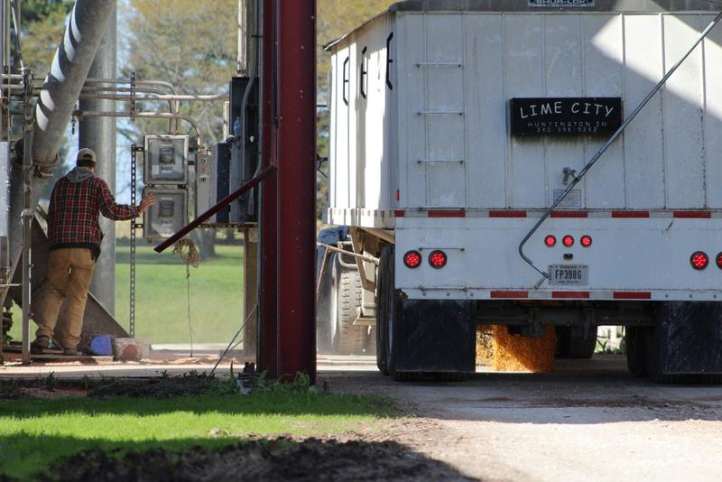 A Mann family farmer dumps freshly harvested corn kernels from a hopper truck into underground conveyor belts that feed storage bins at White Oak Farms in Cloverdale. (Annie Ropeik/IPB News)