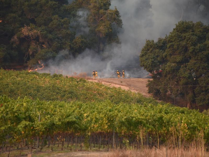 Firefighters protect a vineyard in Santa Rosa, Calif., on Wednesday. Ken Pimlott, the chief of the California Department of Forestry and Fire Protection, called the fires