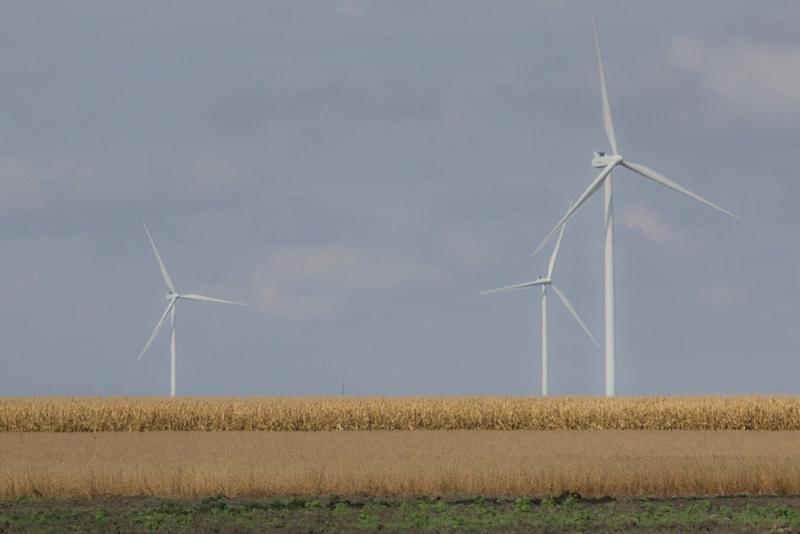 Soybeans and corn grow in front of wind turbines at the Meadow Lake wind farm in northwest Indiana. (Annie Roepik/IPB News)