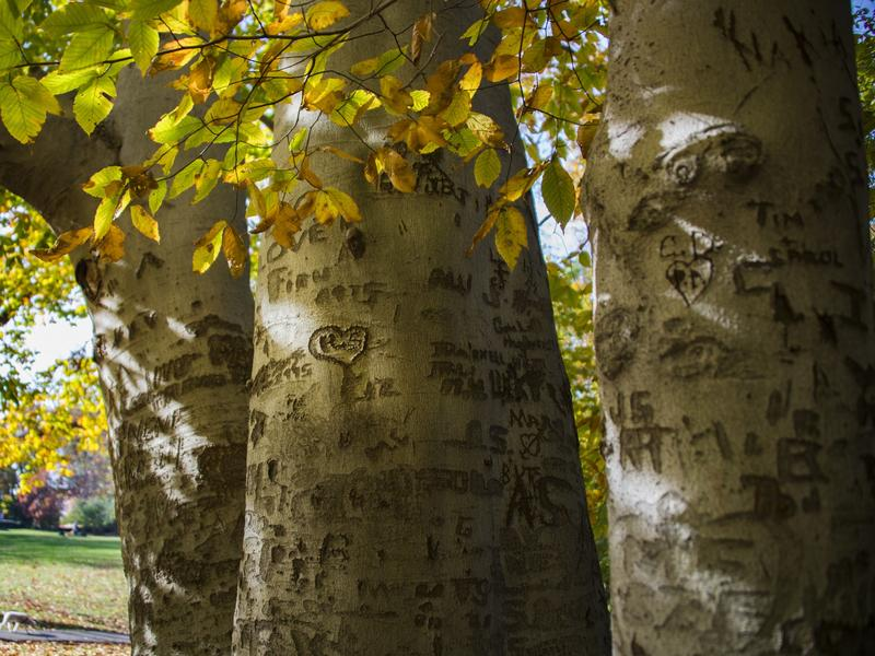 Carving your initials in a tree in Washington, D.C.? Not illegal. Carving your initials in a sedated patient's transplanted liver? Criminal assault, according to U.K. courts.