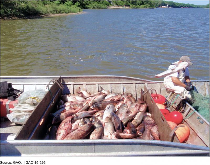Asian Carp Removed from the Illinois River near Morris, Illinois (U.S. Government Accountability Office)