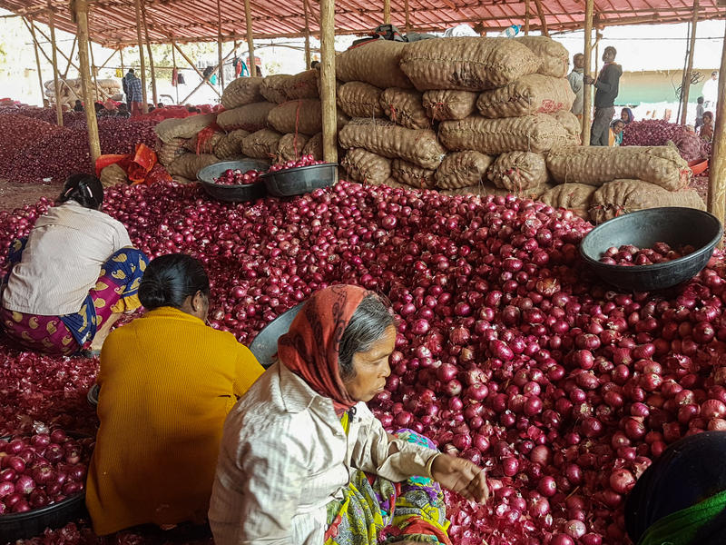 Workers sort onions at a wholesale market in Maharashtra. The state is India's biggest onion producer. Prices have fallen drastically because of surplus and fewer exports.