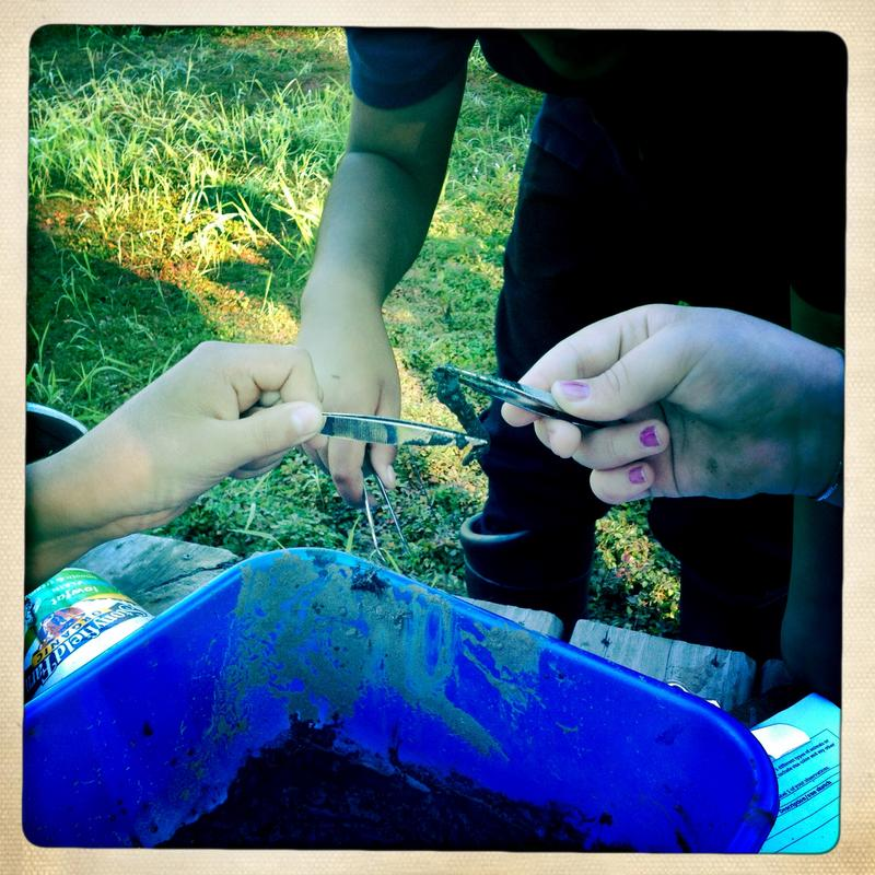 Sixth graders pick critters out of a soil sample.