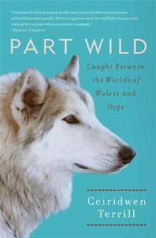 Ceiridwen Terrill, wolf, part wild, wolf-dog, 