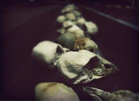Sculpted bird skulls.