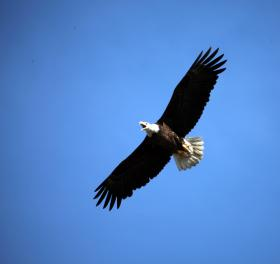 27 bald eagles have died across the state in the past month.