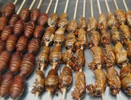 chocolate covered cicadas