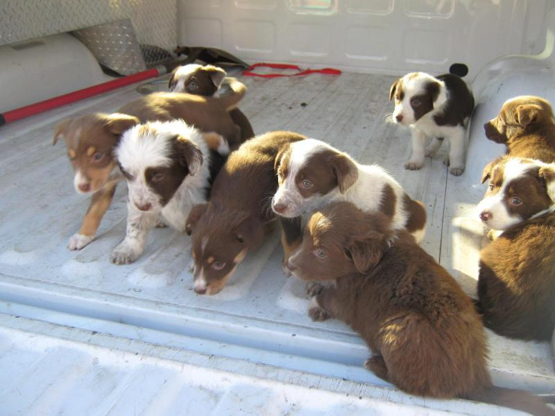 abandoned puppies, Cedar City