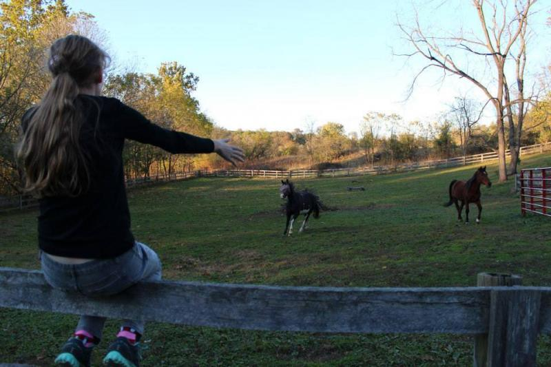 girl on fence calls to horse