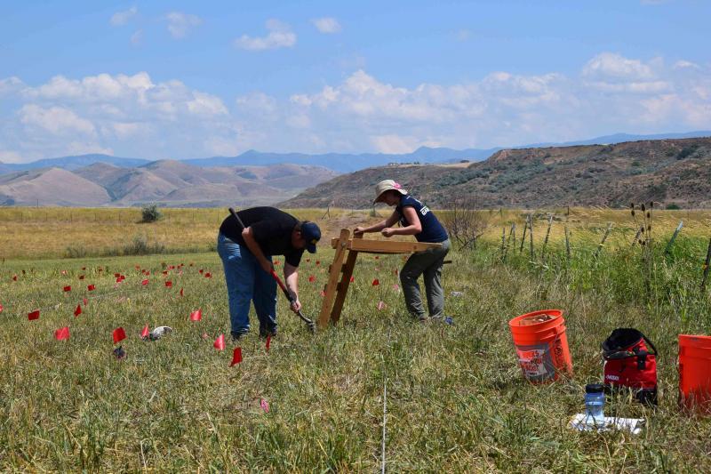 USU excavation team works on Bear River Massacre site.