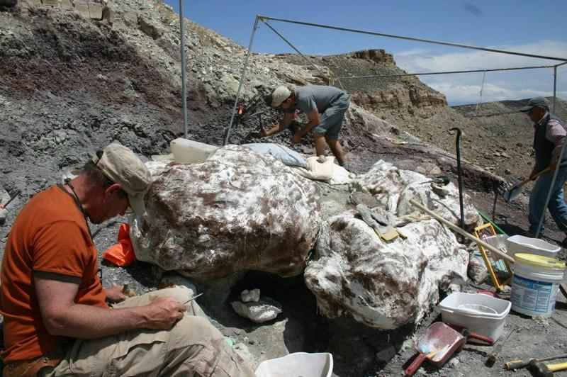 Utahraptor remains