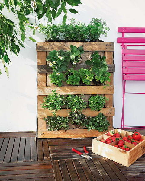 Picture of vertical pallet gardening