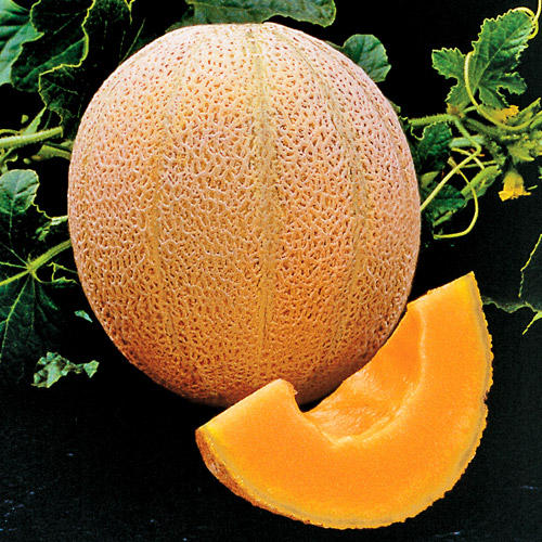 A photo of cantaloupe