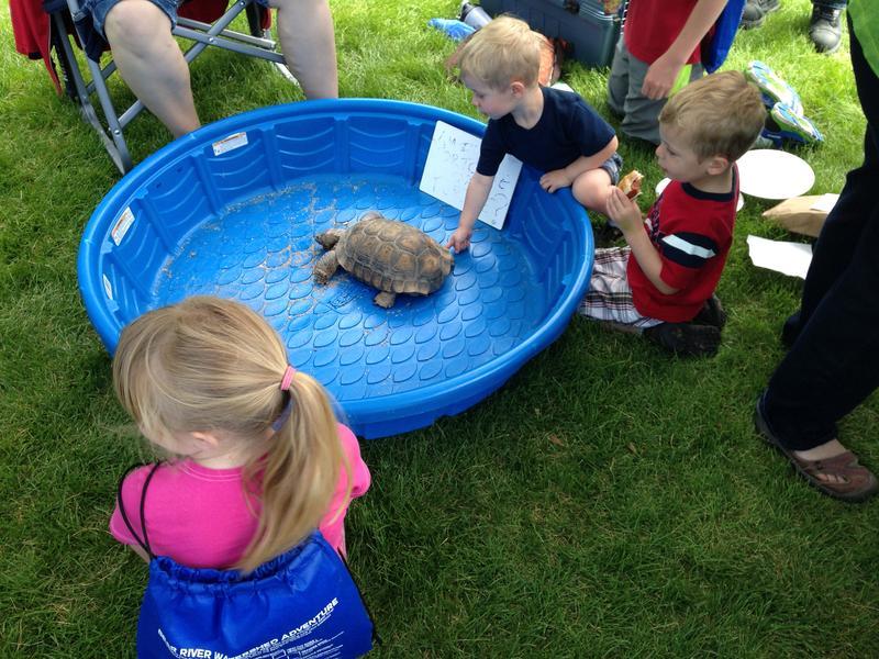 Children pet a tortoise that the Ogden Nature Center brought.