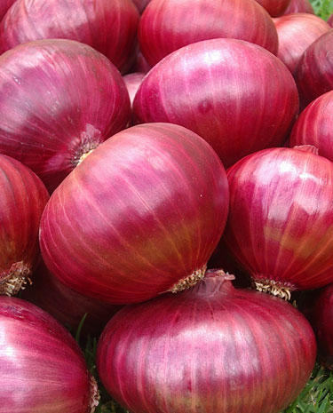photo of red onions