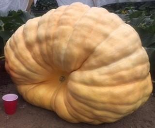 Photo of Atlantic Giant Pumpkin