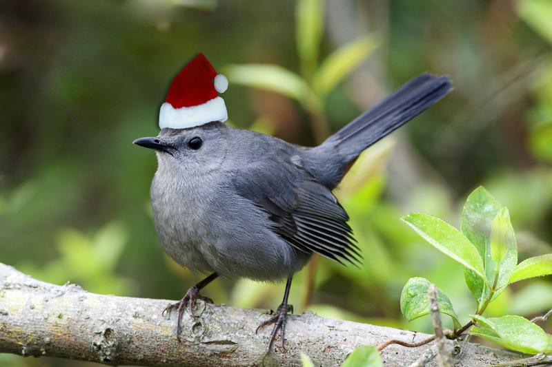 Photo of a bird with a santa hat on his head.
