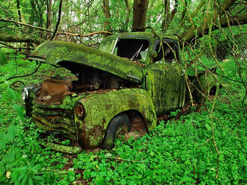 Photo of moss on old truck
