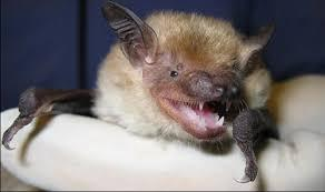 The Utah Department of Health reports seven bats found in Utah have tested positive for the rabies virus