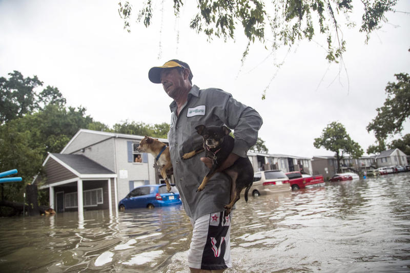 Animals being resuced in Texas