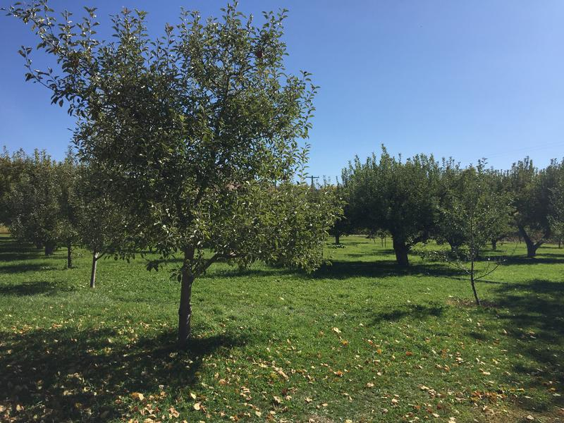 Paradise Valley Orchard