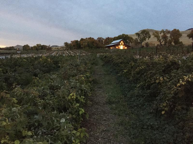 Barn In Progress At Mt. Naomi Farms