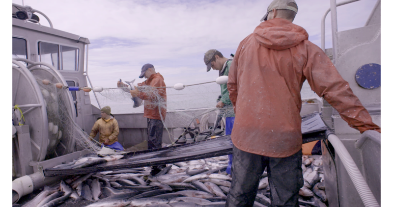 Captain Nick Lee and his crew fish for salmon in Bristol Bay, Alaska
