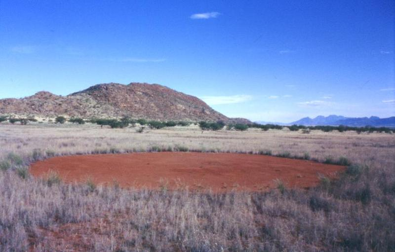 Fairy circles in Marienfluss, Namibia