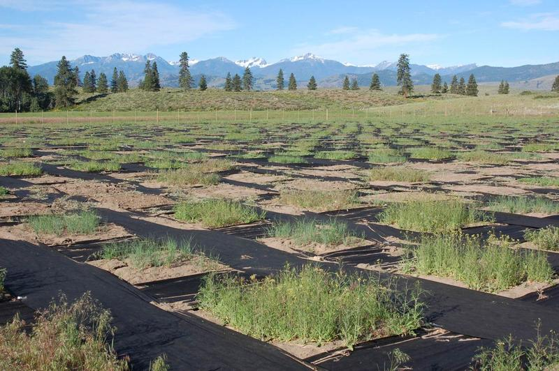 Plant-soil feedback experiment