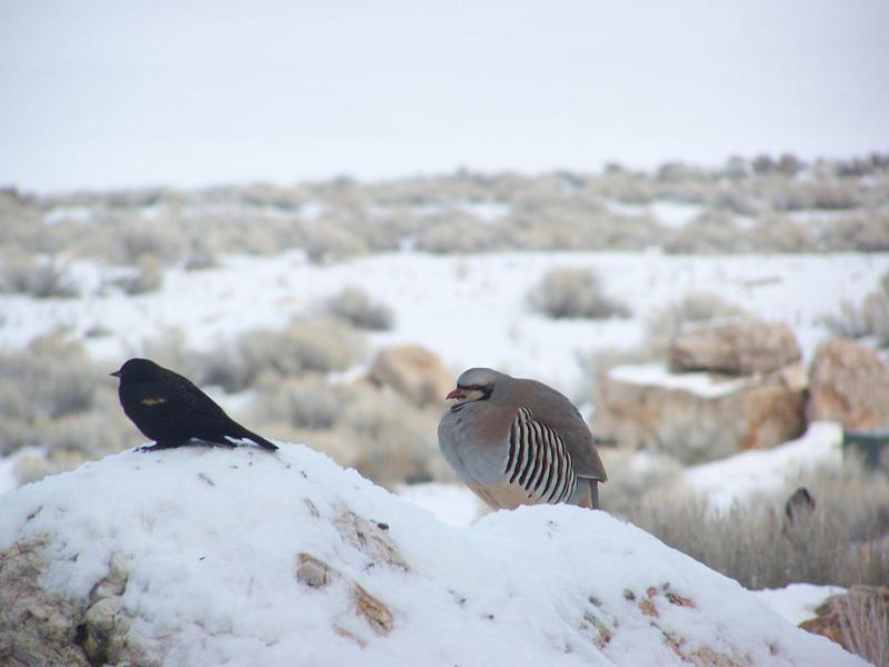Winter bird sightings in Utah