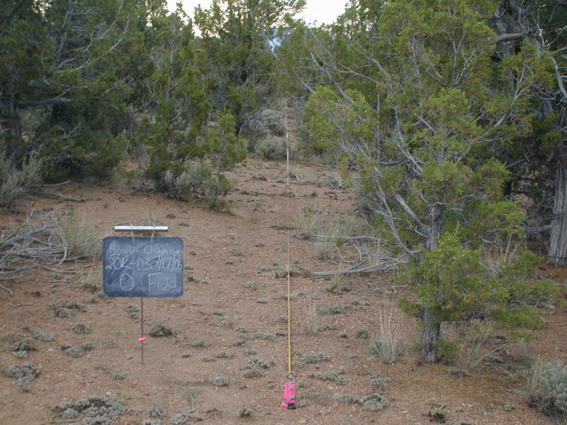 The Bowler chaining area before vegetation removal was dominated by pinyon pine and juniper
