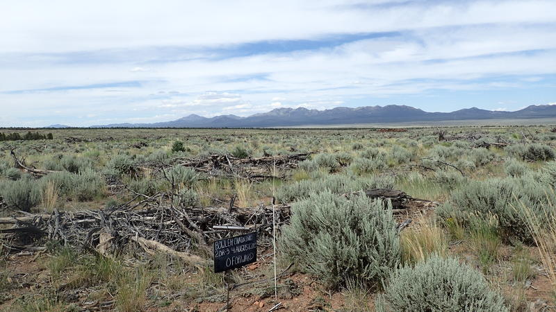 The Bowler chaining area after vegetation removal and seeding is dominated by sagebrush.