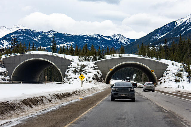 Separated crossing implemented in Banff National Park