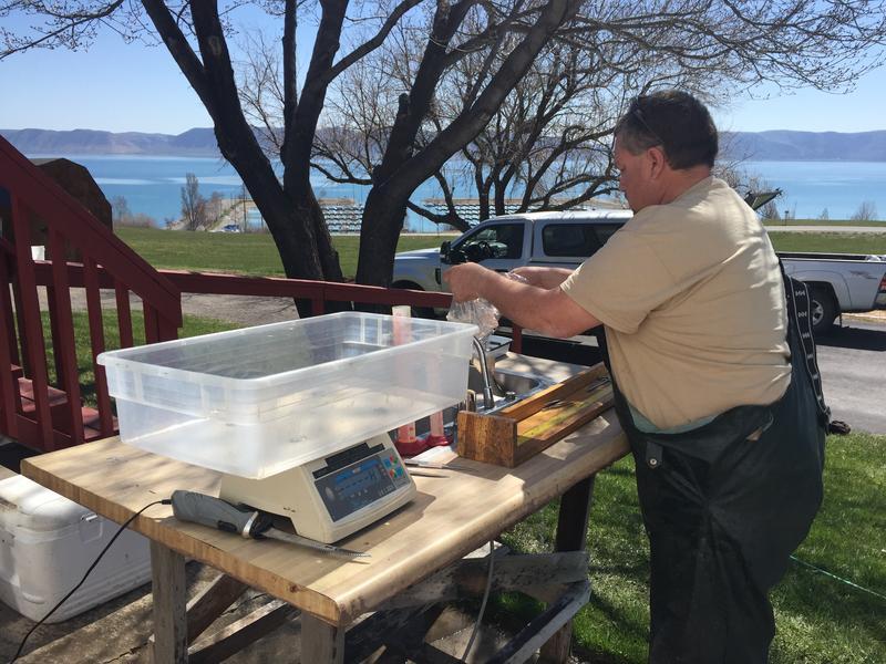 Field station fish sampling