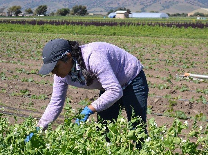 The Utah Farmworker Program is reaching out to people working in agriculture throughout the state. The program is designed to help workers and their families become self-sufficient.