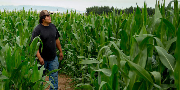 According to the USDA's National Agricultural Statistics Service, Native Americans continue to be one of the most underrepresented groups in the Census of Agriculture.