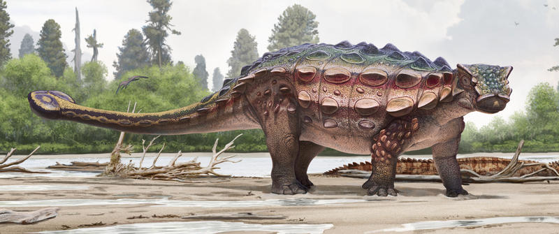Life reconstruction illustration (closeup) of the new armored dinosaur Akainacephalus johnsoni: New dinosaur discovered in Utah.