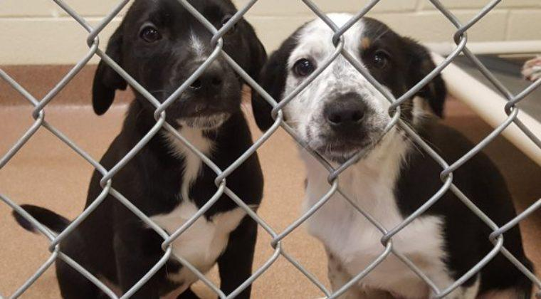 Animals are currently being housed at the Logan City Police Department.