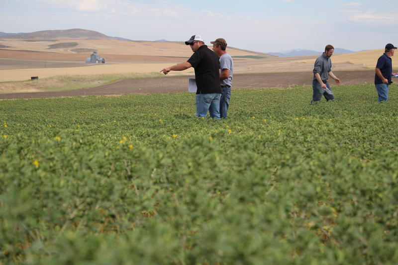Farmers use information and data used in safflower trials on their own operations