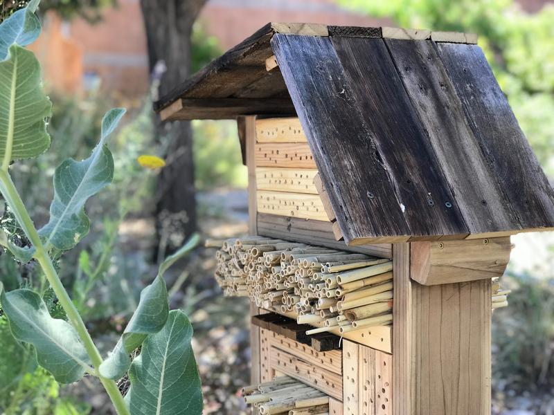 Bee box on Utah State University's Moab campus
